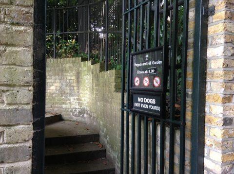 גן סודי בלונדון - פרגולה גרדן