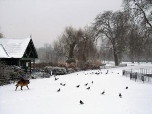 כלבון משוטט בשלג.